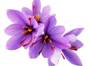 61DqZ g9HL. SL1024  300x225 - Nguồn gốc của nhụy hoa nghệ tây (Saffron)